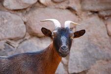 Free Goat Royalty Free Stock Image - 4569866