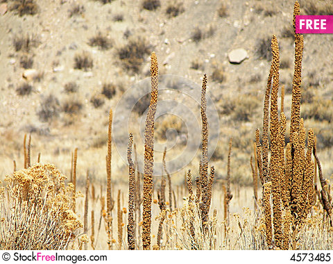 Free Cattails At The Bottom Of A Hill Royalty Free Stock Photo - 4573485