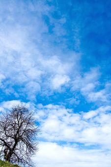 Free Tree And The Sky Royalty Free Stock Photo - 4570535