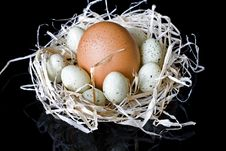 Free Eggs Royalty Free Stock Photo - 4571655