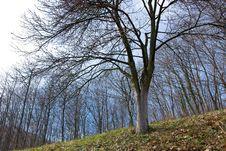 Free Tree Royalty Free Stock Photography - 4571827