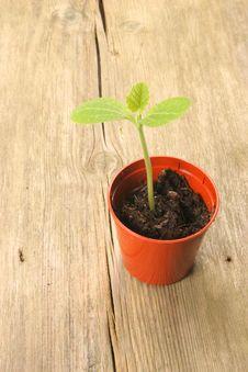 Free Seedling In Pot Stock Image - 4572611