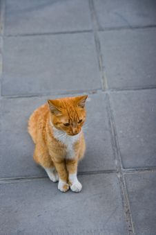 Free Cat_naughty_style Stock Photography - 4573852