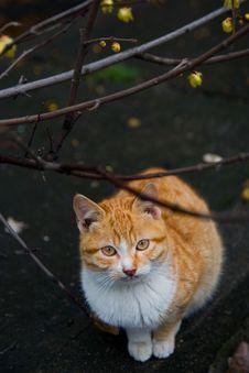 Free Gazing Cat Stock Photo - 4573890