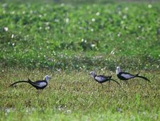 Three Birds Stock Image