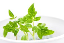 Free Green Plant, Isolated Stock Photos - 4575913