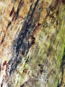 Free Tree Trunk Close-up Stock Images - 4576154