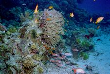 Free Underwater Life Of Coral Reef Stock Images - 4576234