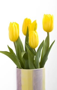 Free Fresh Tulips Royalty Free Stock Images - 4576299