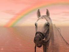 Horse In The Rainbow Royalty Free Stock Image