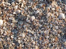 Free The Small Broken Cockleshells On A Beach Royalty Free Stock Images - 4576749
