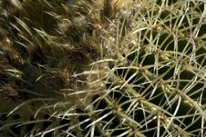 Free Cactus Royalty Free Stock Image - 4576836