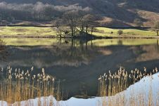 Free Reeds On Rydal Water Royalty Free Stock Images - 4576919