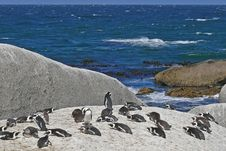 Free Penguins Resting Royalty Free Stock Photography - 4577387