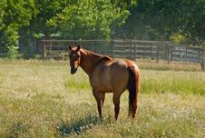 Free Brown Horse Stock Photography - 4577592
