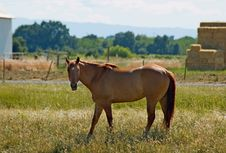 Free Brown Horse Royalty Free Stock Photography - 4577607