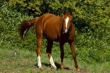 Free Brown Horse Stock Photography - 4577642
