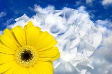 Free Yellow Flower Stock Photo - 4577790