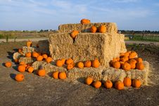 Free Pumpkins Royalty Free Stock Image - 4578846