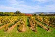 Free Vineyard In Autumn Royalty Free Stock Image - 4578996