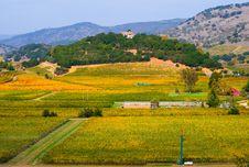 Free Vineyard In Autumn Royalty Free Stock Photo - 4579035