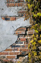 Free Grunge Ivy Brickwall Stock Photo - 45737130