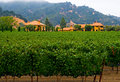 Free Winery In Summer Royalty Free Stock Photo - 4580605