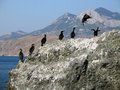 Free Group Of Cormorants On A Rock Royalty Free Stock Photography - 4583407