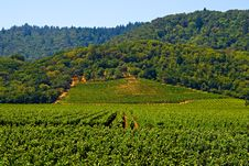Free Vineyard In Summer Royalty Free Stock Photography - 4580017