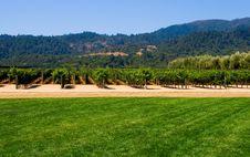 Free Vineyard In Summer Royalty Free Stock Photos - 4580098