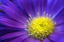 Free Daisy Glow Stock Image - 4581891