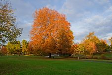 Free Autumn In A Park Royalty Free Stock Photo - 4582175