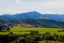 Free Vineyard In Summer Stock Images - 4582374