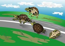 Free Tortoise-race Stock Photography - 4582872