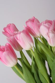 Free Bouquet Pink Tulips Royalty Free Stock Photography - 4583147