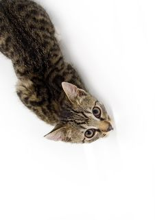 Free Cat Looking From Below Stock Photography - 4583782
