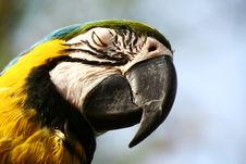 Free Ara Parrot-blue And Gold Stock Photography - 4584132