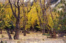 Free Autumn Tree Stock Image - 4586921