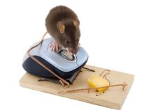 Free Clever Mouse Royalty Free Stock Photography - 4587647