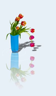 Free Bouquet Of Tulips In A Vase 5 Royalty Free Stock Photo - 4588275