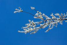 Free Blossom Petals Stock Photo - 4588520