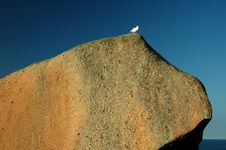 Free Rock With Bird Stock Image - 4588631