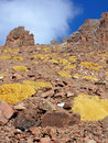 Free Yellow Moss Stock Image - 4592701