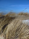 Free Beach Grass In Winter Stock Photography - 4595292