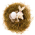 Free Easter Rabbit In A Nest Royalty Free Stock Images - 4596459