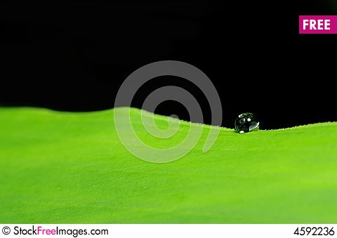 Free Water Droplet On Leaf Royalty Free Stock Image - 4592236