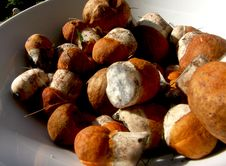 Free MUSHROOMS Climate Smart Food Royalty Free Stock Photos - 4591868