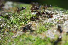 Free Ants Communicating With Each Other Stock Photos - 4592053