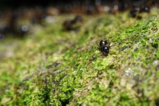 Free Deserting Ant Stock Image - 4592061