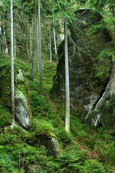 Free Rock In Mist Of Forest Stock Photo - 4593270